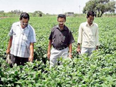 Men-Walking-through-Indian-Bean-field