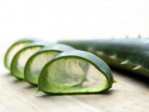 Aloe cut